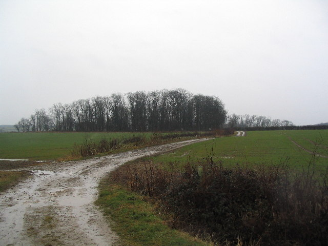 Track to South Lodge, Lobthorpe