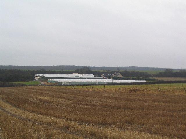 Greenhouses near Castle Bytham