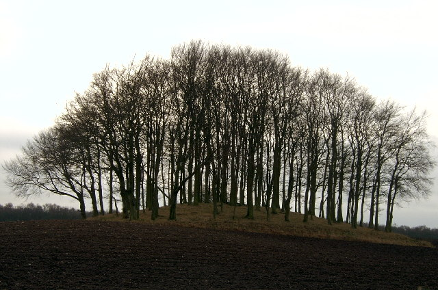 Tree covered mound in field, looking south from the B9127