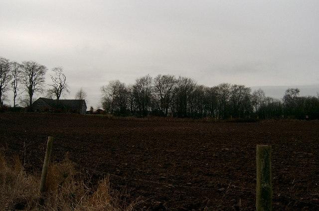 Farmland with shelter belt