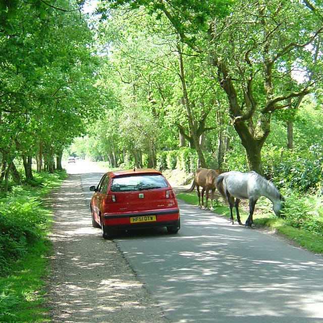 Traffic calming New Forest style