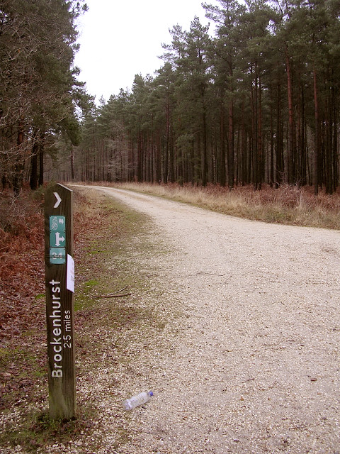 Junction of paths in the Parkhill Inclosure, New Forest