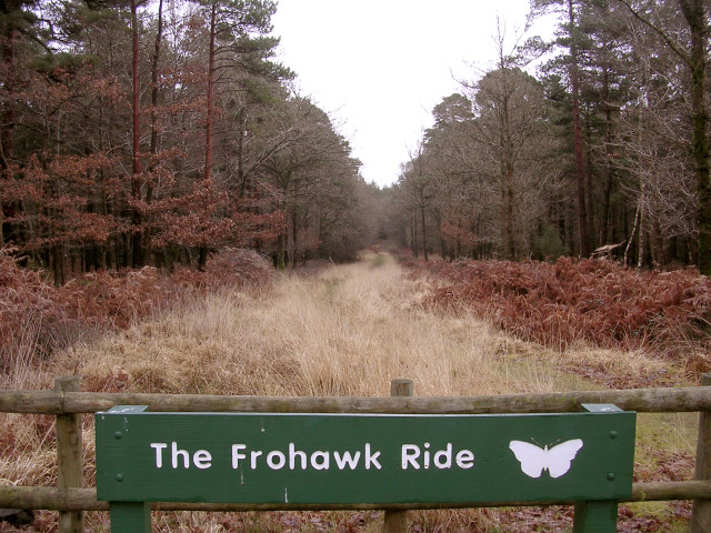 The Frohawk Ride in the Parkhill Inclosure, New Forest