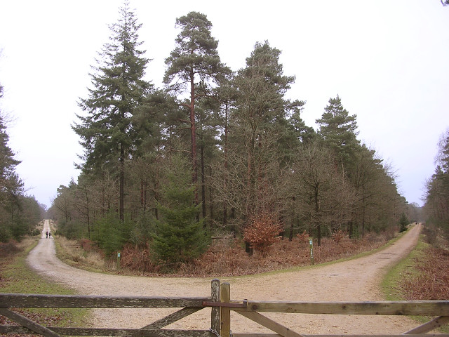 Pignal Inclosure from Standing Hat, New Forest