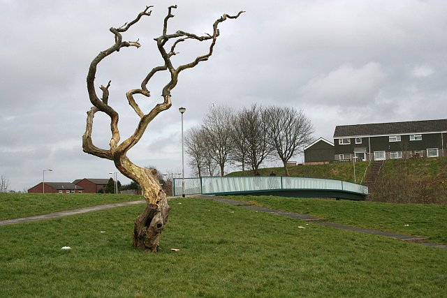 Dead Tree and Footbridge