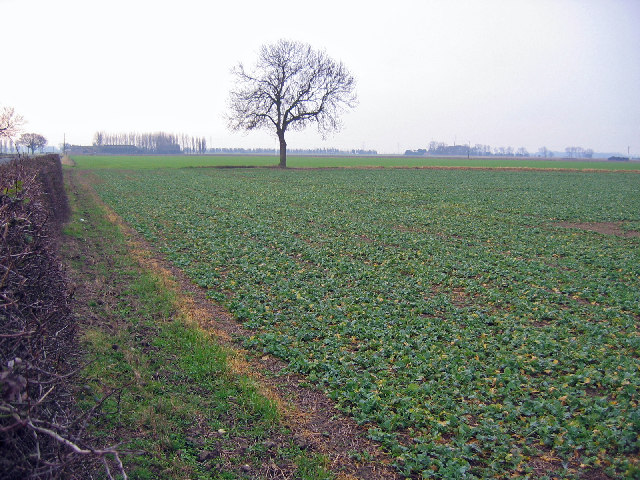 Farmland at SE838278