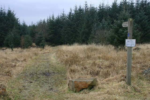 Footpath enters forest