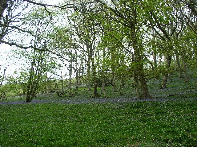 Woods near Melin y Wig