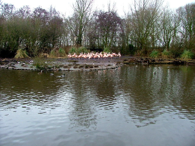 Martin Mere, Wildfowl & Wetlands Centre
