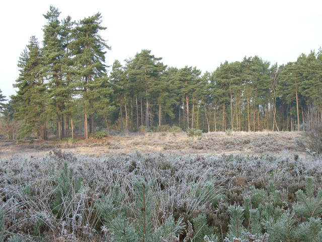 Heathland next to Heath Pool