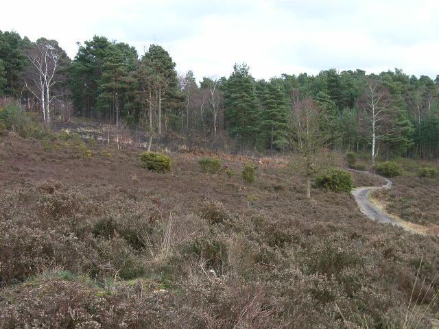 Heathland near Sandhurst