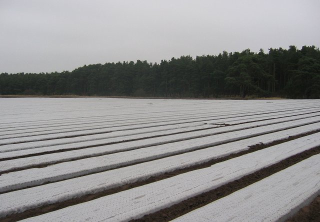 Polythene covered crops, Shiells