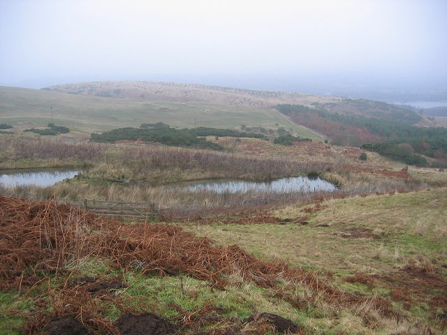 Flight ponds, Black Hill