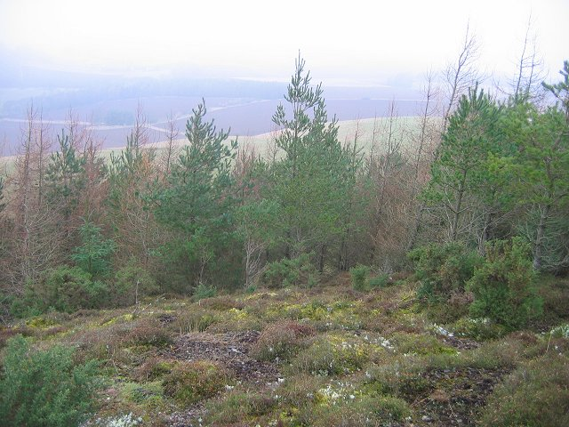 Clearing on Black Hill