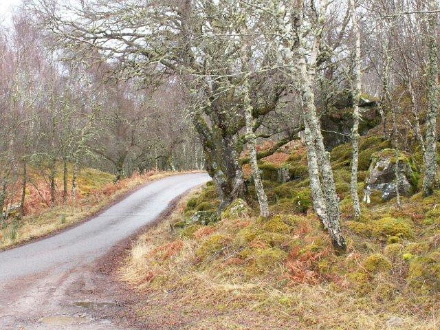 Old birch wood