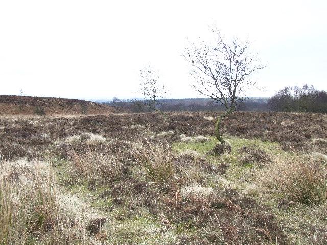 Ramsley Moor.