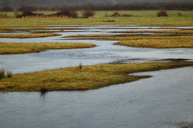Frozen pools on watermeadow.
