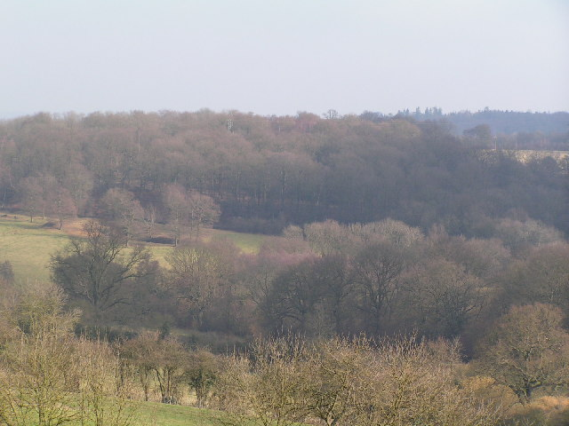 Minepit Woods
