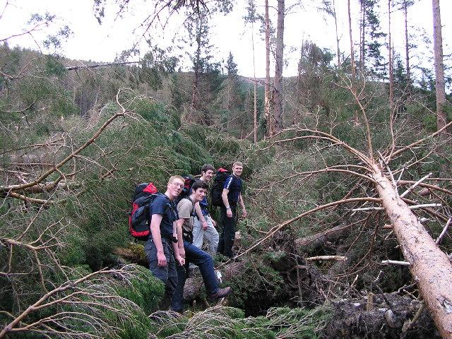 Wind damage in Inverlael Forest