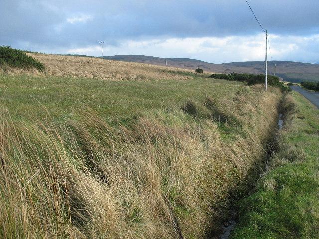 Grassland and scrub by the B8001, Kintyre.