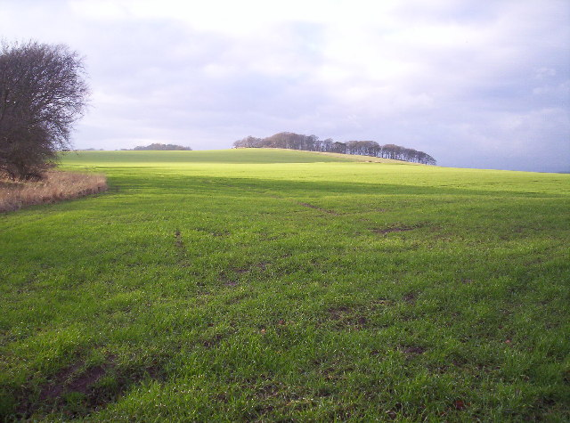Grassy Field and Copse on Hill Top