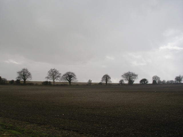Fields south of Alresford Road