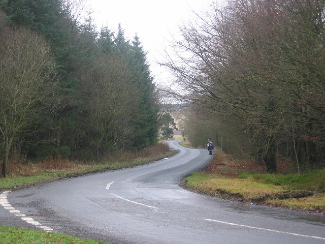 Road in Drummy Wood.