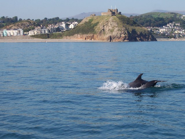 Criccieth Castle from the sea