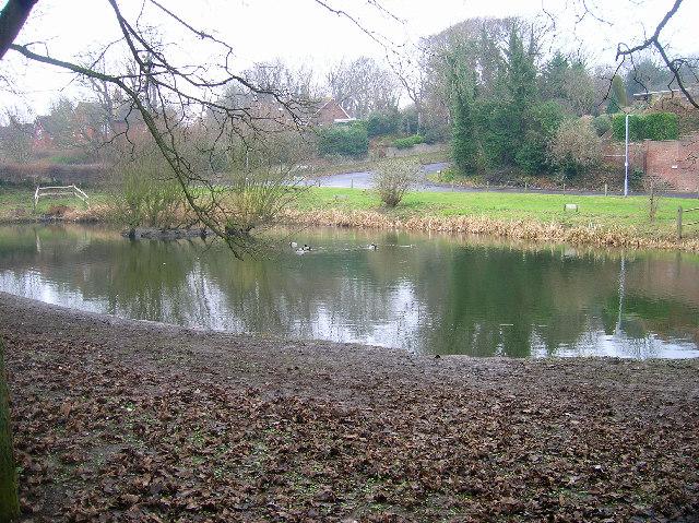 East Blatchington Pond, Seaford.