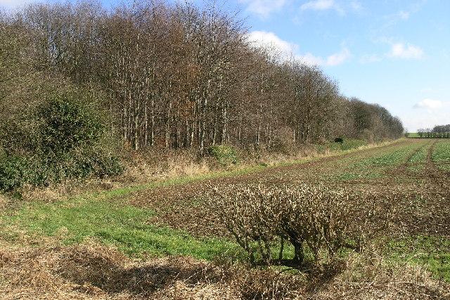 Loscar Wood