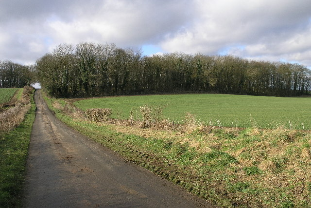 Common Road Woods