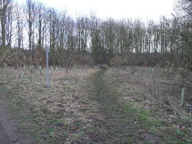 Footpath To Quarrington