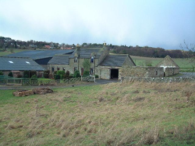 Morton of Blebo Farm