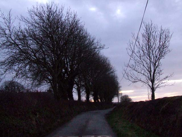 Dusk in the country lane