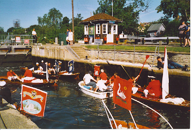 Swan Uppers in Sunbury Lock.