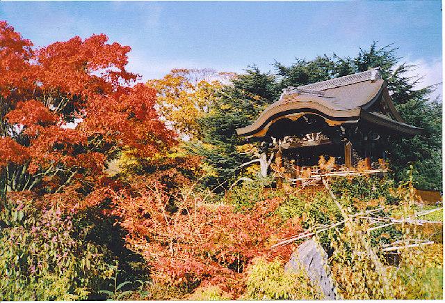 Autumn in the Japanese Garden, Kew.