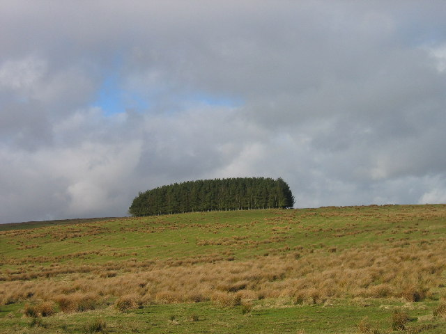 Copse of Cowstand Hill  near Sweethope Lough