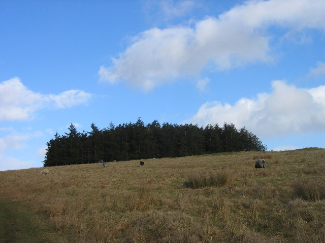 Copse on Camp Hill near Tone Hall