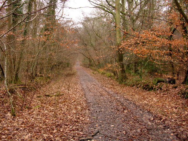 Track through the Pondhead Inclosure, New Forest