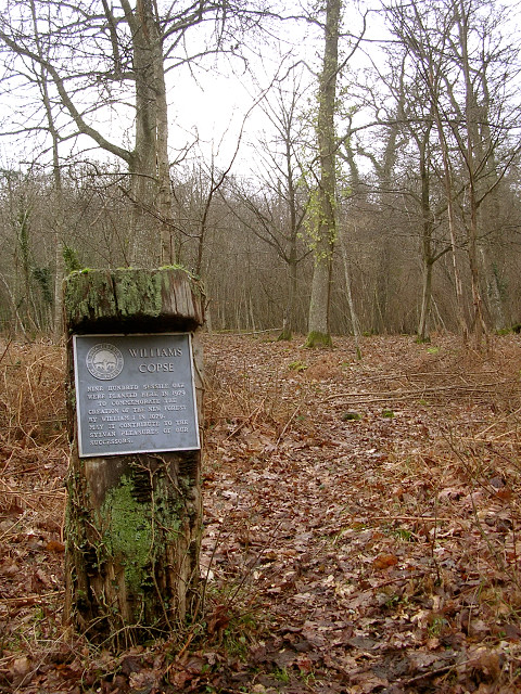 Williams Copse in winter, Pondhead Inclosure, New Forest