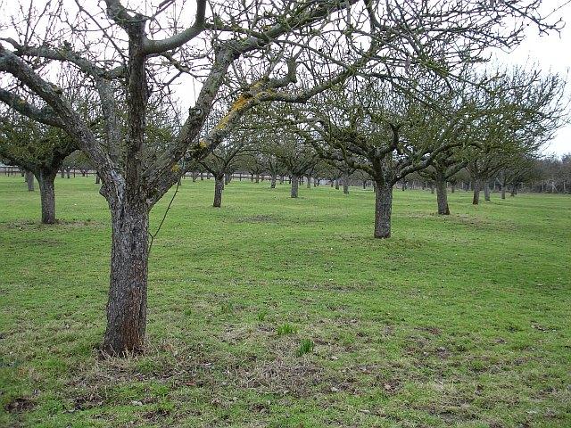 Orchard, Holywell Lane, Upchurch