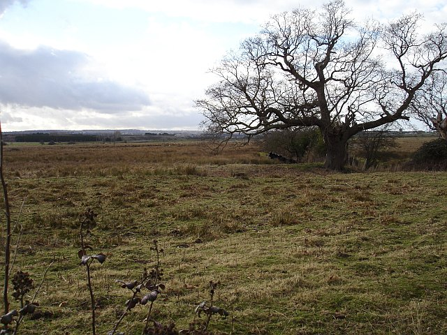 Rough pasture near Wetham Green