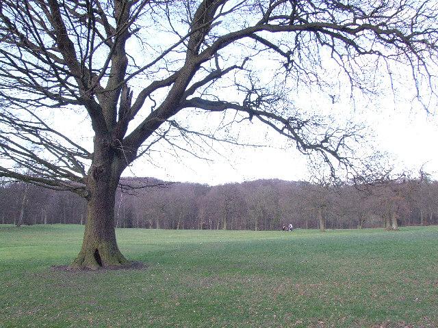 Graves Park.