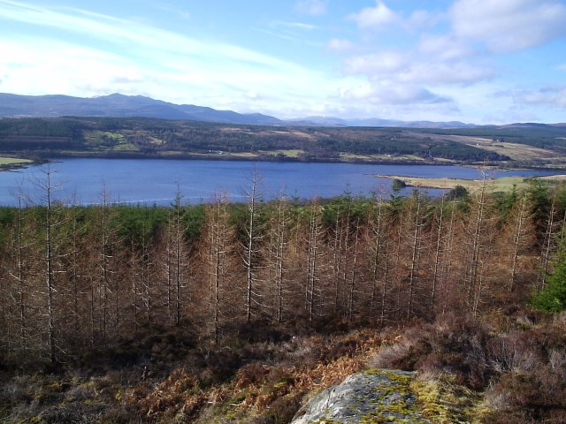 Looking from Maikle Wood towards the Kyle of Sutherland