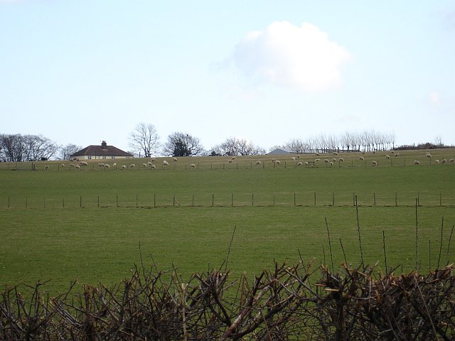 Pasture east of Breach Lane