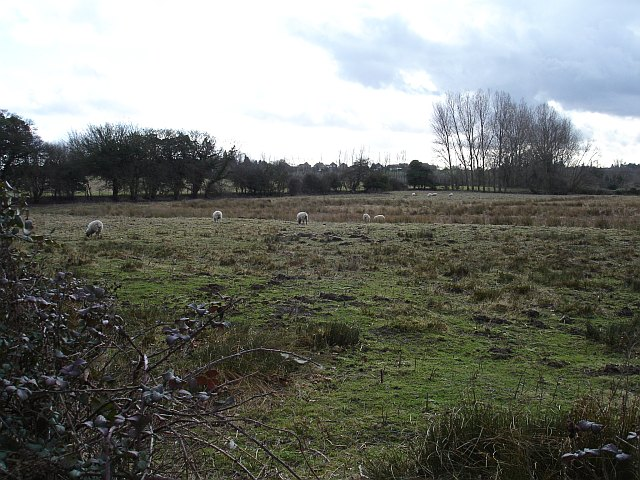 Marshy pasture, Wetham Green