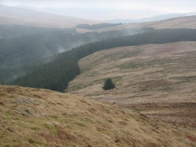 Forest below Tarmangie Hill