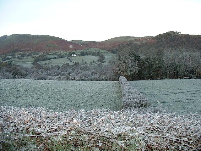 Frosty Hedge