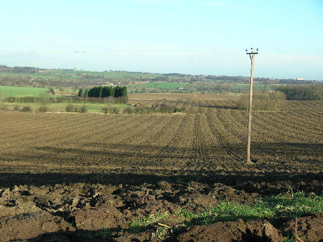 Fields off Ninevah Lane