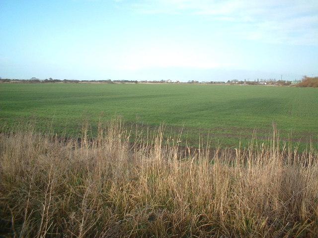 Fields near Deal